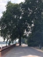 Walk - Thames Path south bank - Section 2 of 4 - 00019